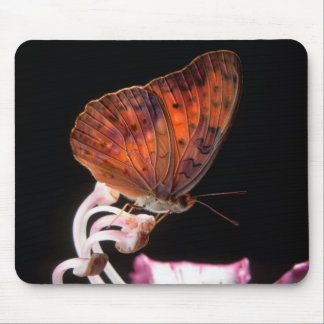 Butterfly On Flower, Rustenburg, Northwest Mouse Pad