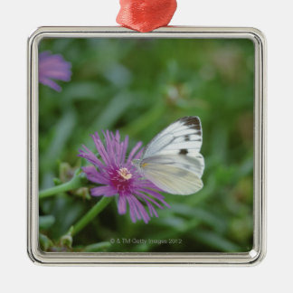 Butterfly on flower Silver-Colored square decoration
