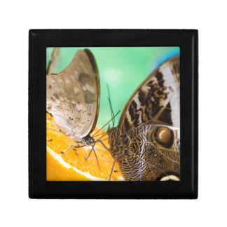butterfly on fruit gift box