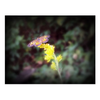 Butterfly on Goldenrod Flowers Postcards