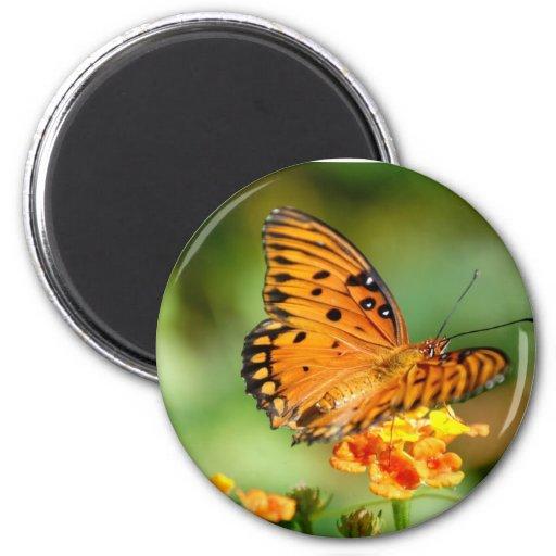 Butterfly on Lantana Magnets