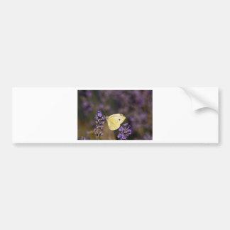 Butterfly on lavender bumper sticker