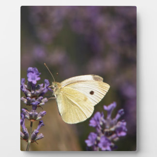 Butterfly on lavender plaque