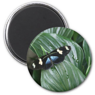Butterfly on Leaf 6 Cm Round Magnet