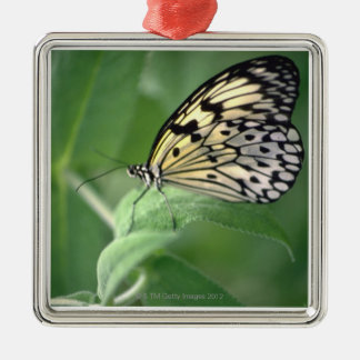 Butterfly on leaf Silver-Colored square decoration