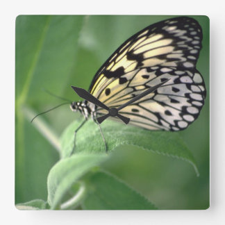 Butterfly on leaf square wall clock
