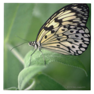Butterfly on leaf large square tile