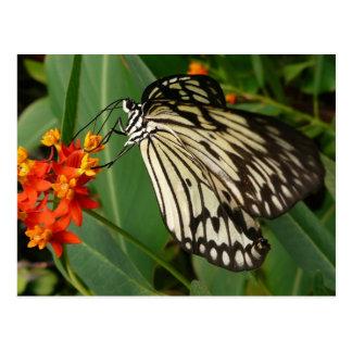 Butterfly on Orange Flower Postcards