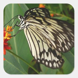 Butterfly on Orange Flower Square Sticker