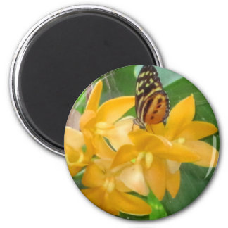 Butterfly on Orchid 6 Cm Round Magnet