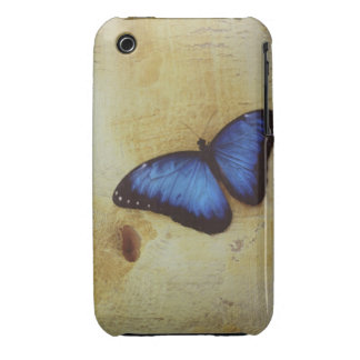 Butterfly on painted surface of woman's stomach iPhone 3 covers