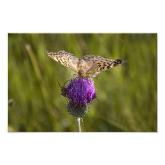 Butterfly on purple flower Photo