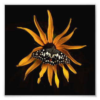 Butterfly on Sunflower Art Photo