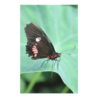 Butterfly on the Edge of a Leaf Flyer