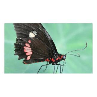 Butterfly on the Edge of a Leaf. Pack Of Standard Business Cards