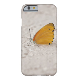 Butterfly on wall, Gauteng Province, South Barely There iPhone 6 Case