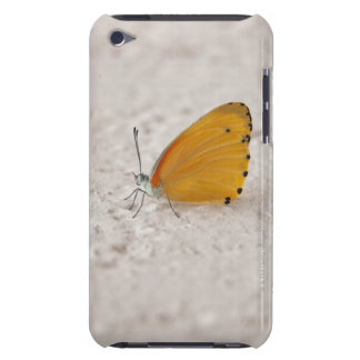 Butterfly on wall, Gauteng Province, South iPod Touch Case