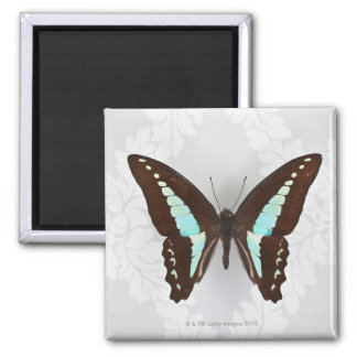 Butterfly on wallpaper background square magnet