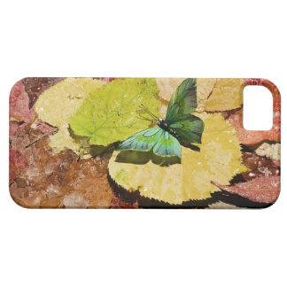 Butterfly on wet autumn leafs iPhone 5 cover