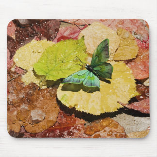 Butterfly on wet autumn leafs mouse mat