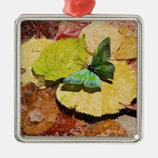 Butterfly on wet autumn leafs Silver-Colored square decoration