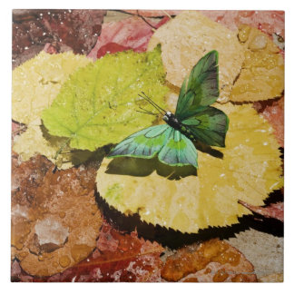 Butterfly on wet autumn leafs tile