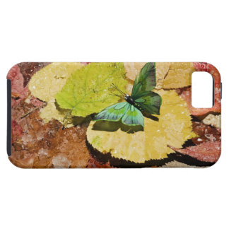 Butterfly on wet autumn leafs tough iPhone 5 case