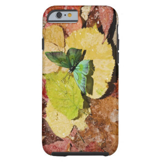 Butterfly on wet autumn leafs tough iPhone 6 case