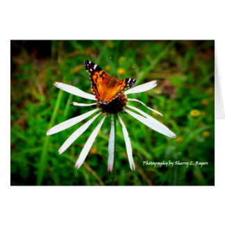 Butterfly on white echinacea coneflower card