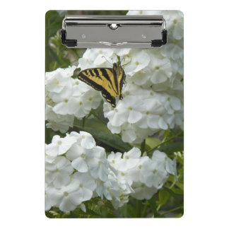Butterfly on White Phlox Floral
