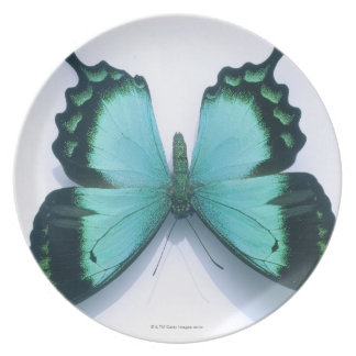 Butterfly on white plate