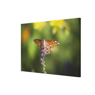 Butterfly on wildflowers canvas print