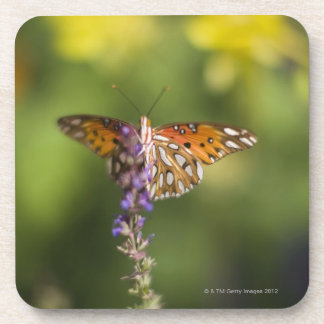 Butterfly on wildflowers coaster