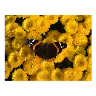 Butterfly on yellow asters postcard