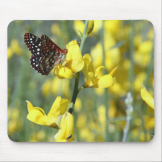 Butterfly on Yellow Flowers Mousepad