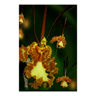 Butterfly Orchid Art Poster