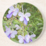 Butterfly Orchid Coaster