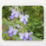 Butterfly Orchid Mousepad