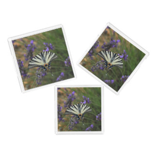 Butterfly - Papilio machaon on flowering lavender Acrylic Tray