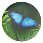 butterfly party plate