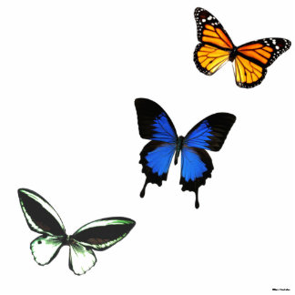 Butterfly Pattern 3D Photo Silhouette Standing Photo Sculpture