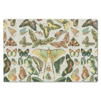 Butterfly pattern tissue paper