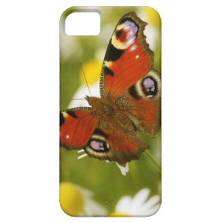 Butterfly - Peacock iPhone 5 Cases