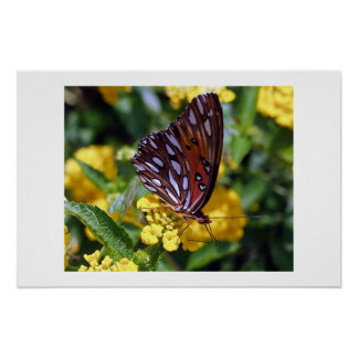 Butterfly perched on Golden Lantana Poster