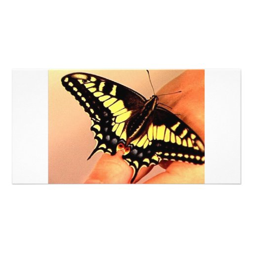 Butterfly Photo Cards