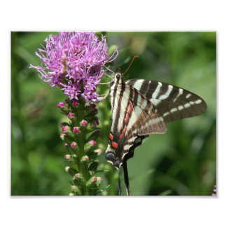 Butterfly, Photo Print.