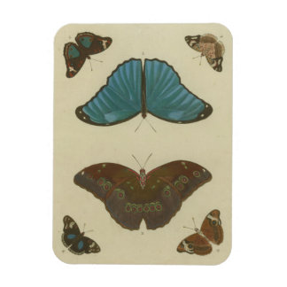 Butterfly Plate from the 1700's #1 Magnet