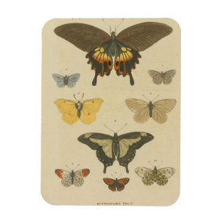 Butterfly Plate from the 1700's Plate 1 Magnet