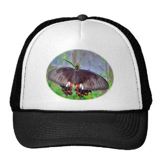 Butterfly Products to Dazzle Hats