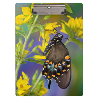 Butterfly profile on yellow flower clipboard